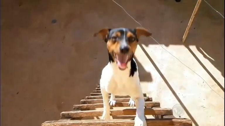 Bichos Curiosos: Cãozinho corajoso sobe escada e deixa família de ...