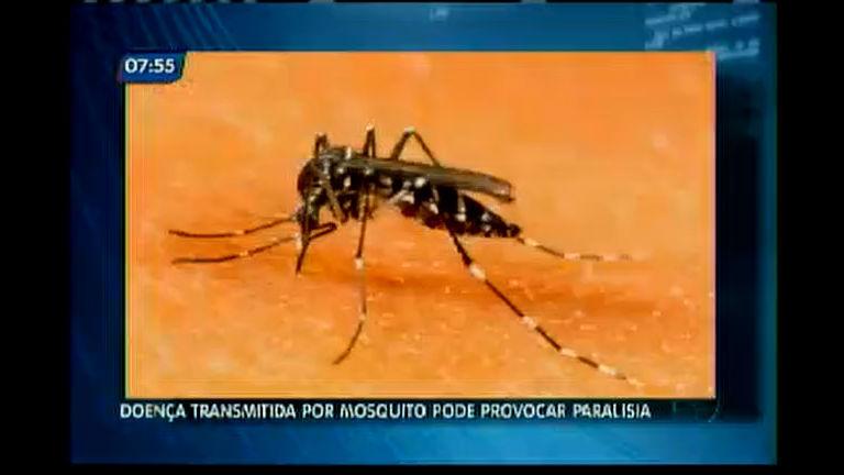 Doença transmitida por mosquito pode provocar paralisia