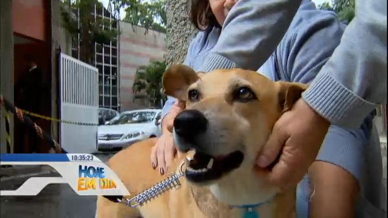 Cão passa um ano e meio na porta de hospital à espera do dono ...