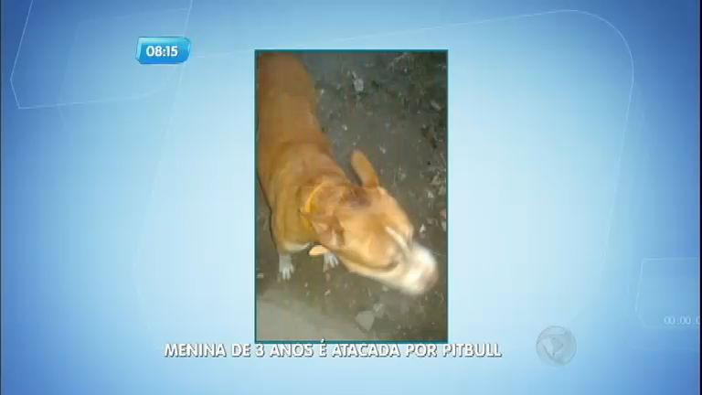 Criança morre depois de ser atacada por pit bull em Santos (SP)
