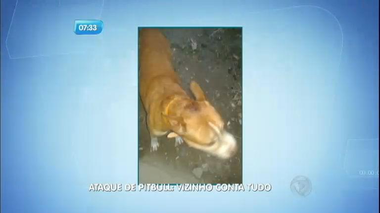 Vizinho conta como tentou salvar criança de ataque de pitbull