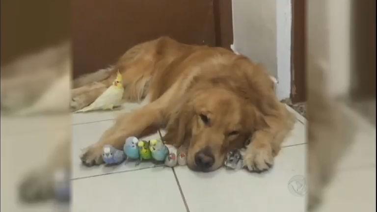 Que fofura! Conheça o cachorro Bob e sua turma inusitada ...