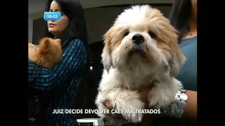 Juiz decide devolver cães maltratados ao dono, mas caso tem uma ...