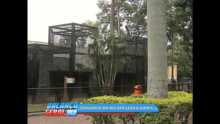 Aos 25 anos, morre leão Simba no zoológico do Rio - Rio de ...