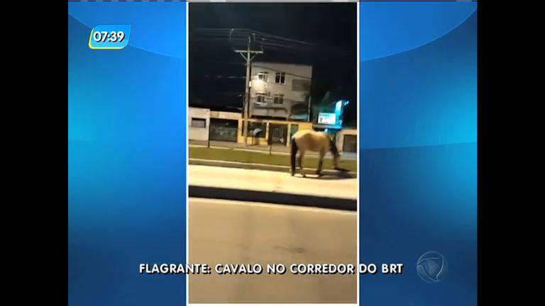 Cavalo pasta no corredor do BRT Transcarioca em Jacarepaguá ...