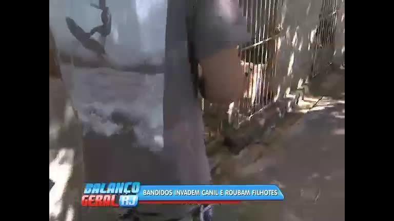 Criminosos roubam cães que chegam a custar R$ 5 mil de um canil ...