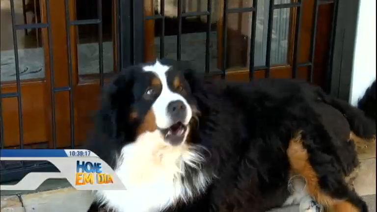 Dona luta contra a obesidade do cão, 25 kg acima do peso ...