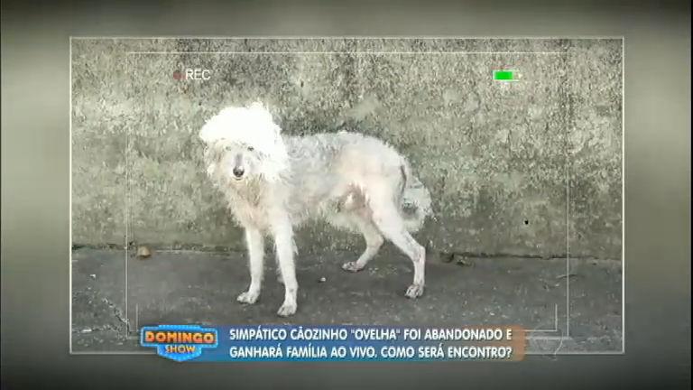 Cachorro abandonado ganha nova família e visual incrível ...