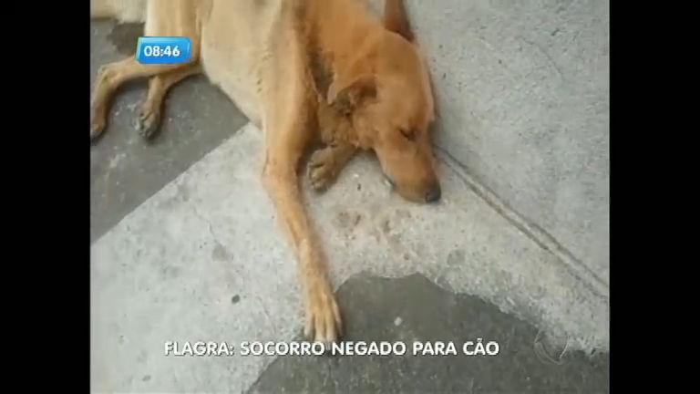 Cachorro morre após funcionário da Vigilância Sanitária negar atendimento