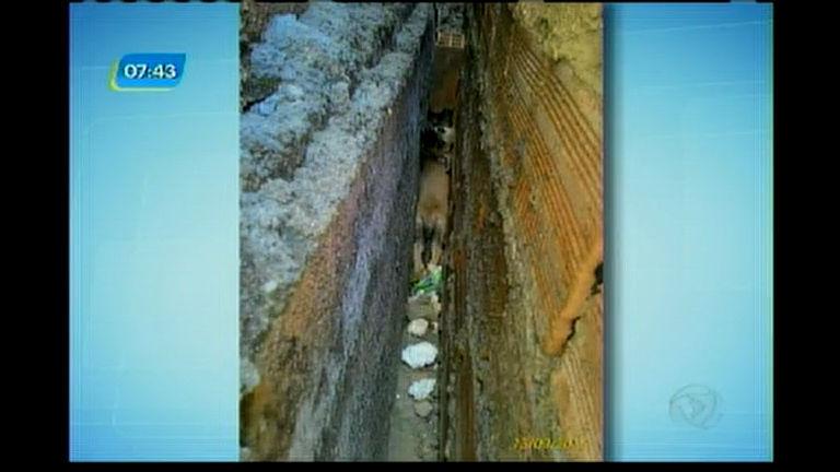 Cadela ficou presa em um vão entre duas casas
