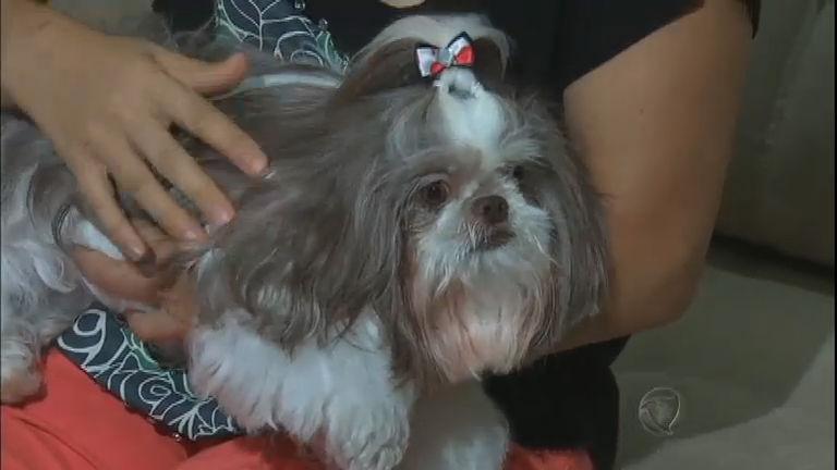 Cachorra ganha nova família após ser maltratada por antiga dona ...