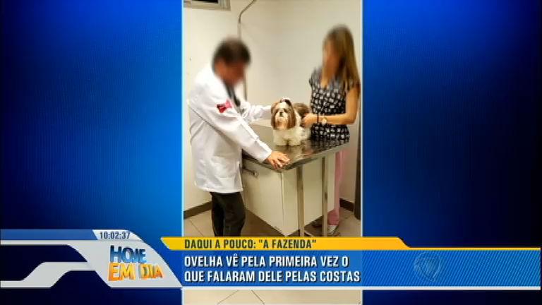 Cachorra agredida por antiga dona ganha nova família em São Paulo