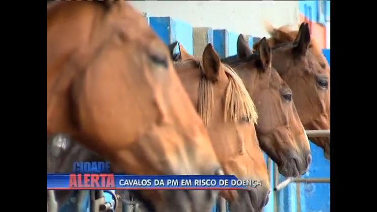 Cavalos da PM estão isolados para evitar doença