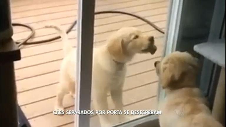 Que fofura! Cães separados por porta de vidro produzem cena ...