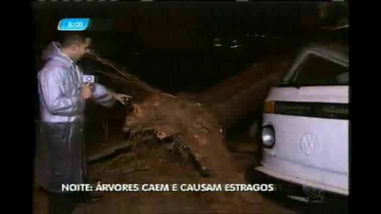 Temporal derruba árvores em Belo Horizonte
