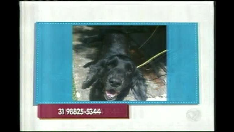Pet Shop do Viana: cachorro perdido no bairro Caiçara, em BH