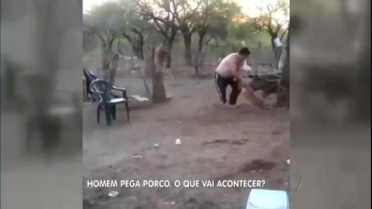 Homem tenta pegar porquinho mas acaba se dando mal