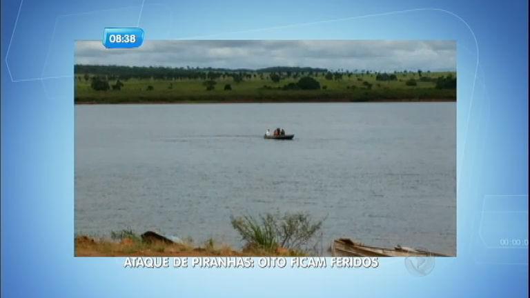 Ataque de piranhas deixa oito pessoas feridas em Populina (SP ...
