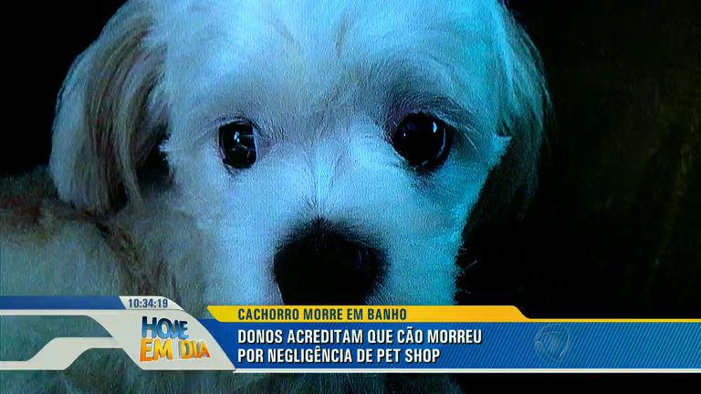 Negligência? Cachorro morre durante banho em pet shop de Mogi ...