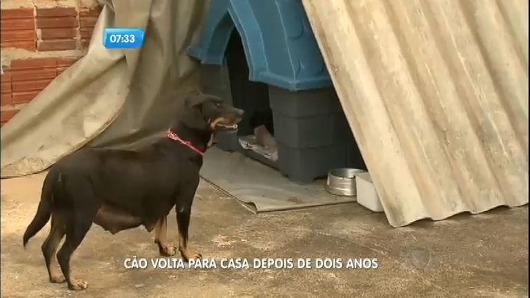 Família reencontra cachorra que desapareceu há dois anos ...