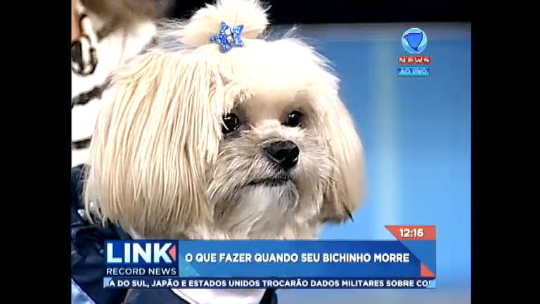 Saiba o que fazer quando seu pet morre - Record News - R7 Link ...