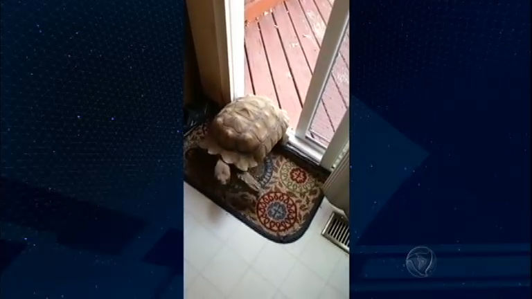 Tartaruga ligeirinha apronta todas no Bichos Curiosos - Notícias ...