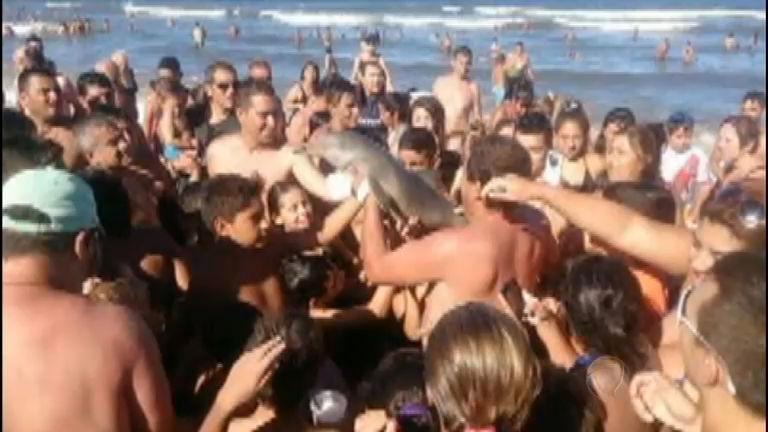 Golfinho morre depois de ser retirado do mar para tirar selfie com ...