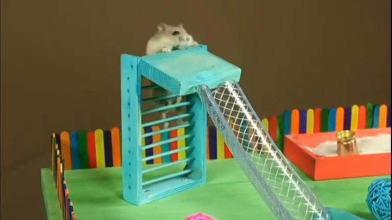 Bichos Curiosos: veja o que os animais aprontaram na semana ...