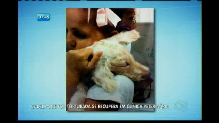 Cadela que teve olhos arrancados se recupera em clínica veterinária