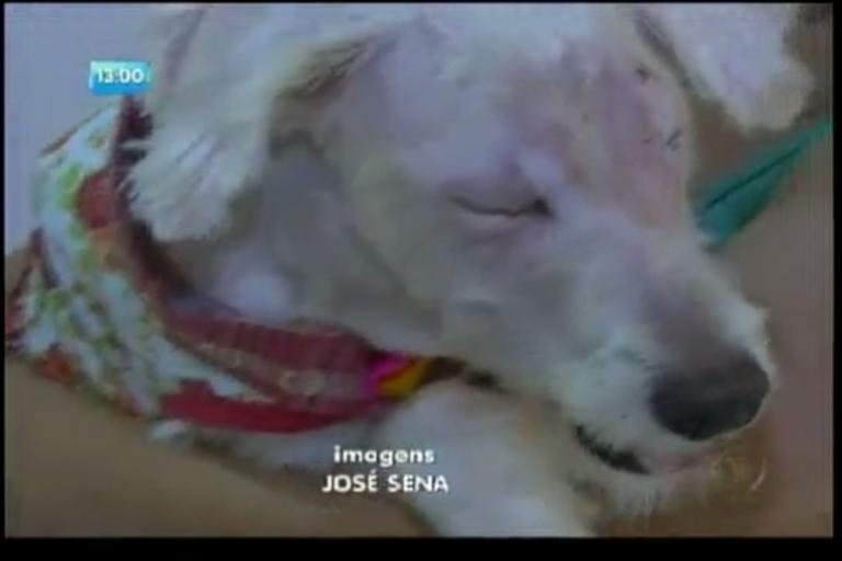 Cadela que teve olhos arrancados tem alta - Bahia - R7 Balanço ...