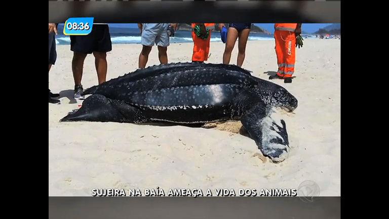 Sujeira na Baía de Guanabara ameaça vida de animais - Rio de ...