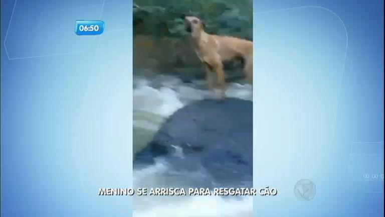 Menino de 13 anos se arrisca para resgatar cachorro em Santa ...