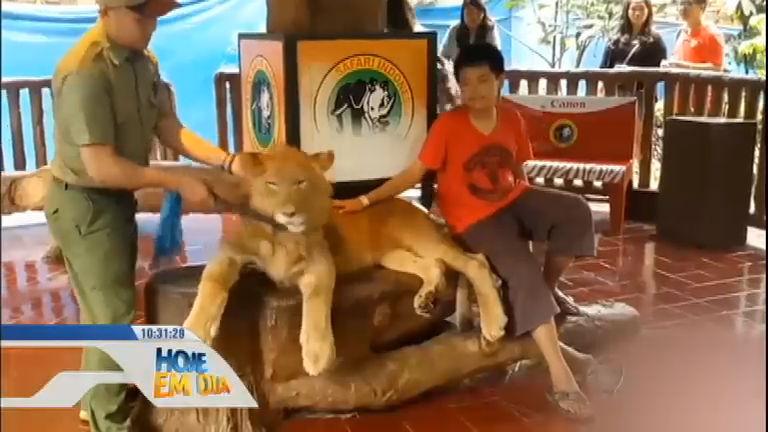 Leão é dopado e obrigado a tirar fotos com turistas em parque da ...