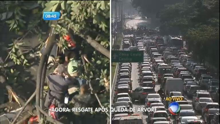 Árvore cai e bloqueia avenida 23 de maio em São Paulo - Notícias ...