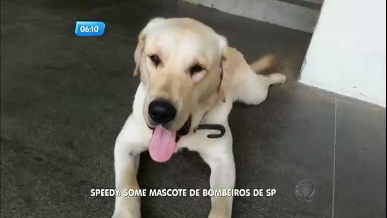 Mascote do Corpo de Bombeiros desaparece em Santo André ...