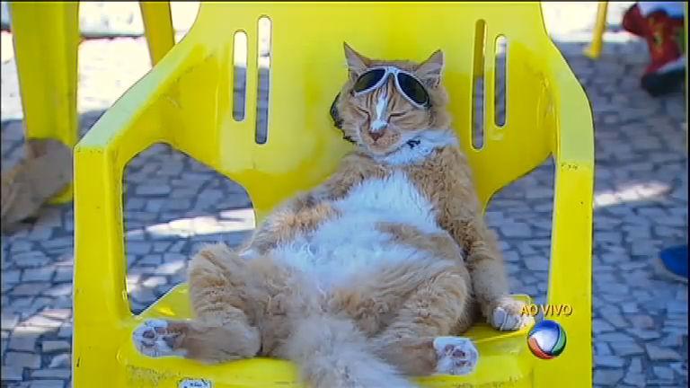 Gato relaxa na orla de praia no Rio de Janeiro - Notícias - R7 Fala ...