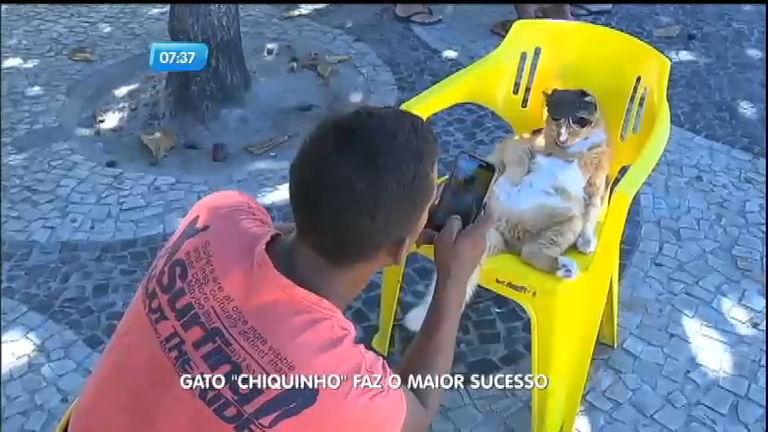 Conheça Chiquinho, o gato que está fazendo o maior sucesso no ...