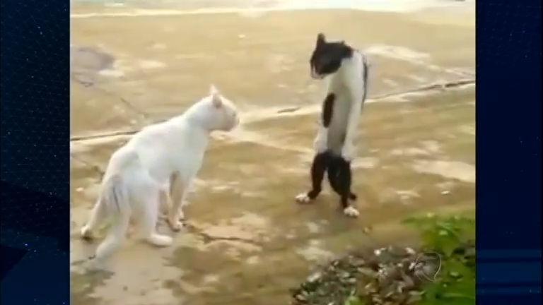 Conheça os gatos que dançam Michael Jackson no Bichos Curiosos