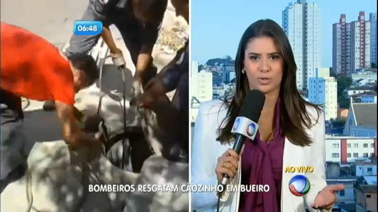 Bombeiros resgatam cachorro de bueiro em Belo Horizonte ...