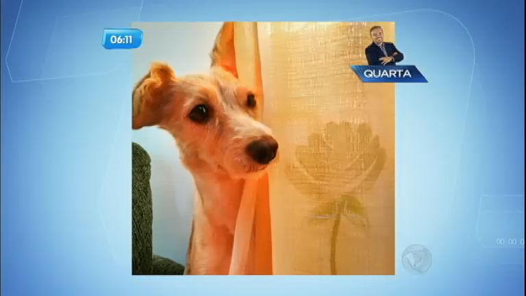 Cachorra foge e desaparece após ser levada para tomar banho em pet shop de Osasco (SP)