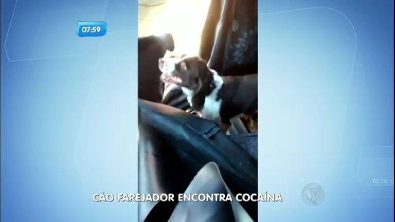 Cão farejador ajuda polícia a encontrar tijolos de cocaína em caminhão no interior de São Paulo