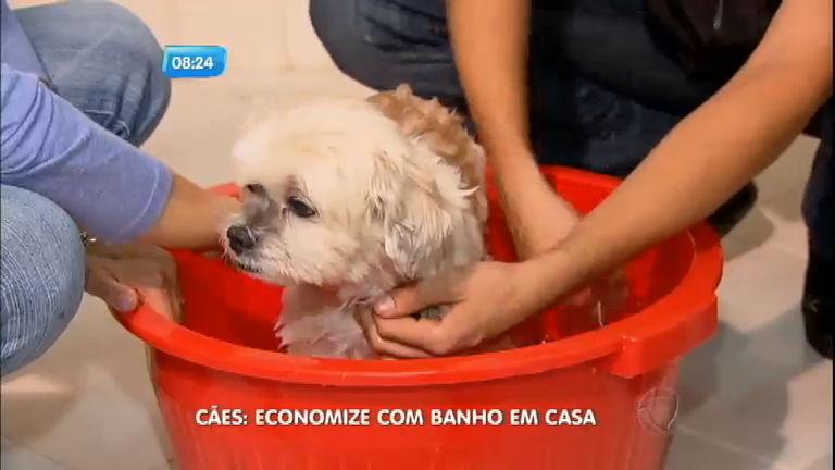 Economia: saiba como dar banho no cachorro em casa