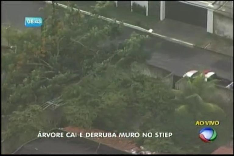 Árvore cai e derruba muro no Stiep