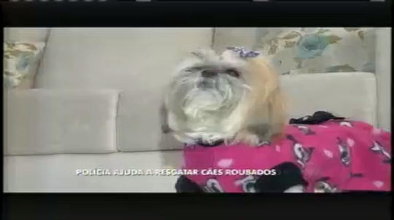 Polícia é aliada em no resgate de cães roubados por bandidos