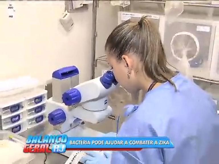Pesquisadores da Oswaldo Cruz anunciam bactéria que pode evitar transmissão do zika vírus