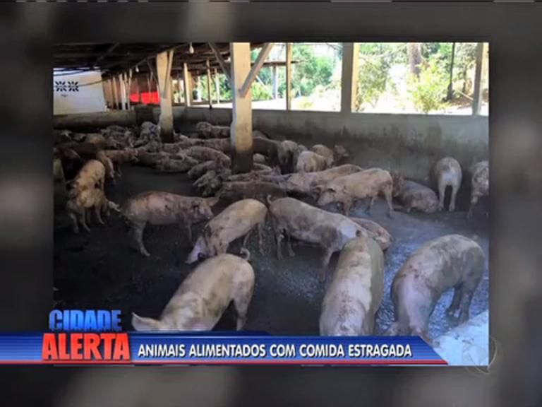 Abatedouro clandestino com cerca de 700 porcos é fechado em ...