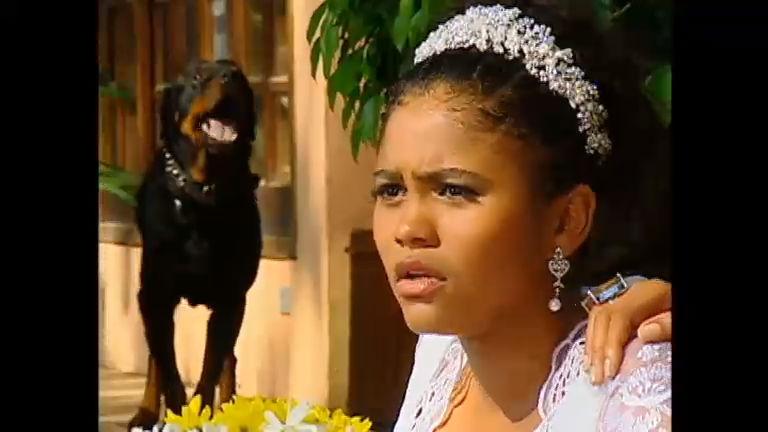 Cachorro bravo invade o casamento de Lúcia