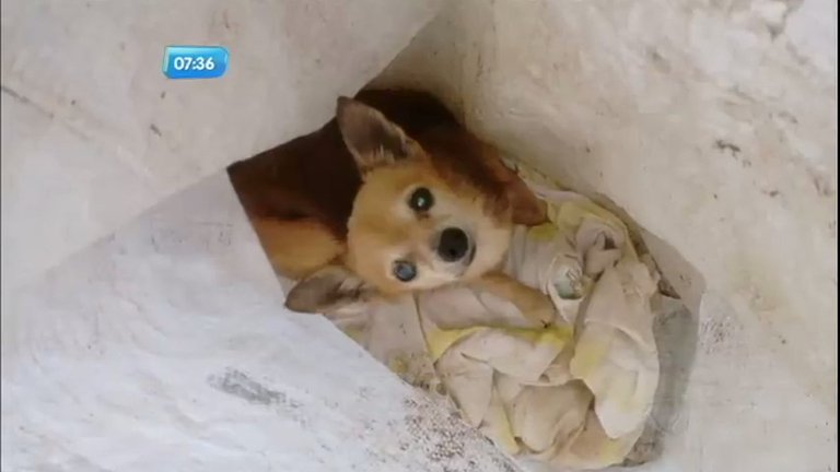 Cachorrinha é encontrada abandonada dentro de saco de lixo em Bebedouro (SP)