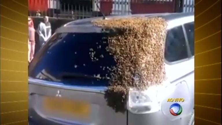 Abelhas infestam carro onde rainha ficou presa na Inglaterra ...