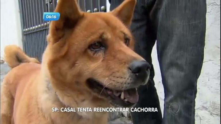 Cachorra reencontra donos depois de fugir de casa - Notícias - R7 ...